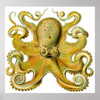 Pulpo de Ernst Haeckel del vintage en amarillo Póster