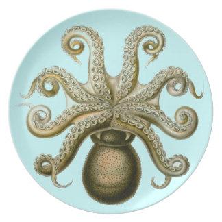 Pulpo de Haeckel Platos
