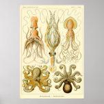 Pulpo Gamochonia del calamar del vintage de Ernst  Posters