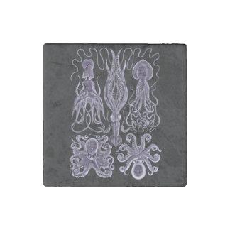 Pulpo y calamar por Haeckel Imán De Piedra