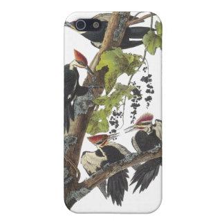 Pulsación de corriente de Pileated, Juan Audubon iPhone 5 Carcasas