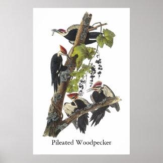 Pulsación de corriente de Pileated Juan Audubon Impresiones