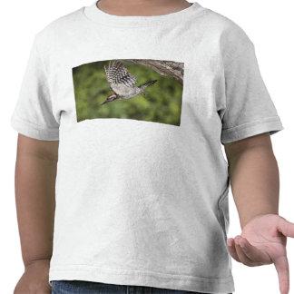 pulsación de corriente Escalera-apoyada, scalaris Camisetas