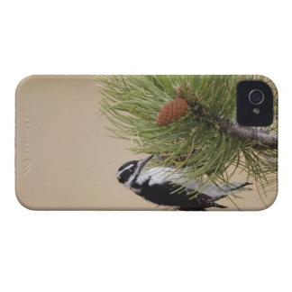 Pulsación de corriente melenuda, villosus del iPhone 4 cárcasas