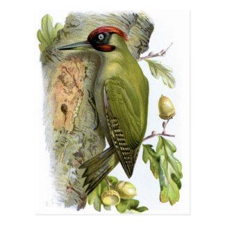 Pulsación de corriente verde - viridis del Picus Tarjeta Postal