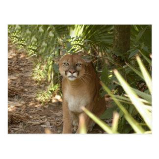 Puma 002 tarjeta postal