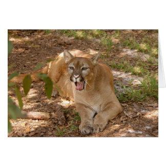 Puma 005 tarjeton