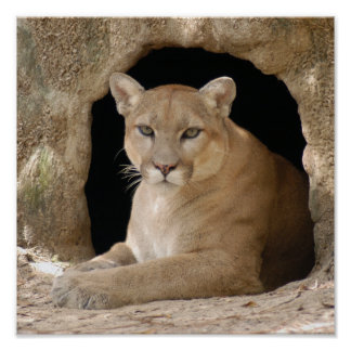 Puma 014 impresiones