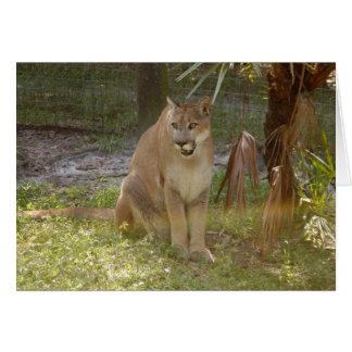 Puma 017 tarjeton