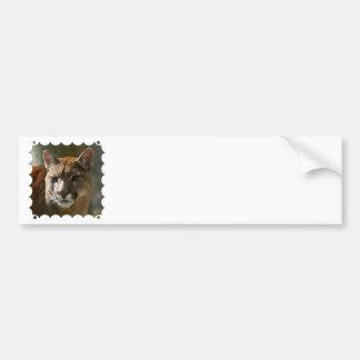Puma Cats Bumper Sticker