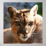 Puma Closeup Print