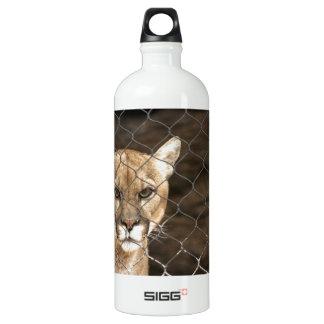 ¡Puma… con actitud!