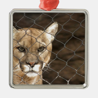 ¡Puma… con actitud Ornatos