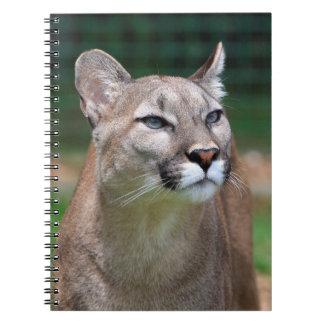 Puma, cuaderno hermoso de la foto del león de mont