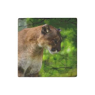 Puma del gato grande, retrato 4 de la foto de la imán de piedra