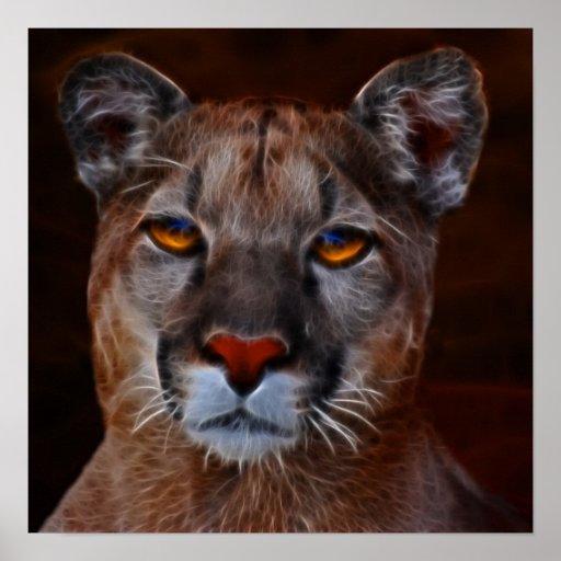 Puma del león de montaña póster