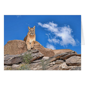 Puma en guardia tarjetas