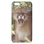 Puma i