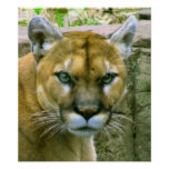 Puma Impresiones