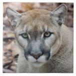 Puma, león de montaña, pantera de la Florida, puma Azulejo Ceramica