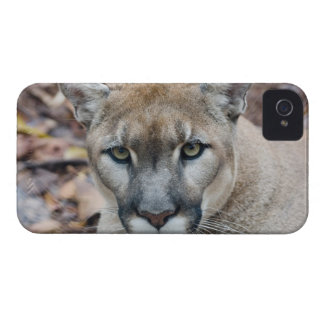 Puma, león de montaña, pantera de la Florida, puma Case-Mate iPhone 4 Protectores
