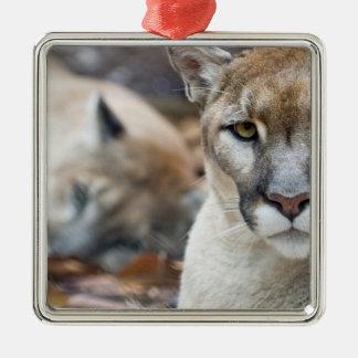 Puma león de montaña pantera de la Florida puma Adorno