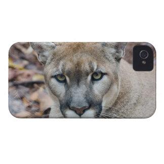 Puma, león de montaña, pantera de la Florida, puma iPhone 4 Case-Mate Cárcasa