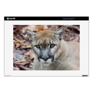 Puma, león de montaña, pantera de la Florida, puma Skins Para Portátil