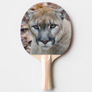 Puma, león de montaña, pantera de la Florida, puma Pala De Ping Pong
