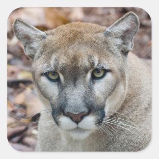 Puma, león de montaña, pantera de la Florida, puma Pegatina Cuadrada