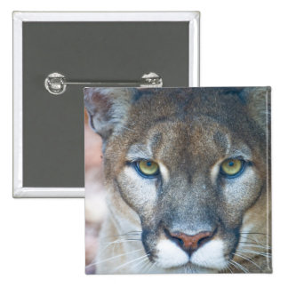 Puma, león de montaña, pantera de la Florida, puma Pins