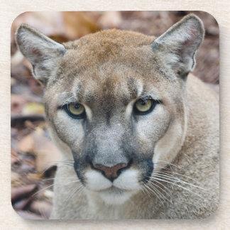 Puma, león de montaña, pantera de la Florida, puma Posavasos De Bebida