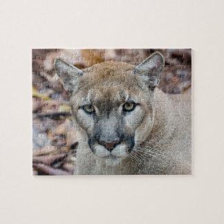 Puma, león de montaña, pantera de la Florida, puma Puzzle Con Fotos