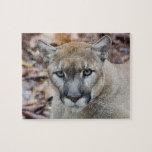 Puma, león de montaña, pantera de la Florida, puma Rompecabezas Con Fotos