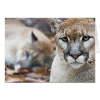 Puma, león de montaña, pantera de la Florida, puma Tarjeta De Felicitación