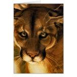 Puma - león de montaña - puma tarjeton