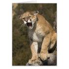 Puma or mountain lion, puma concolor, Captive - Card