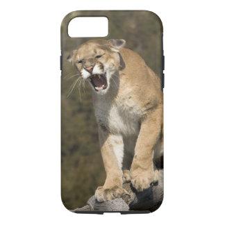 Puma or mountain lion, puma concolor, Captive - iPhone 7 Case