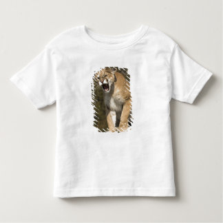 Puma or mountain lion, puma concolor, Captive - Shirt