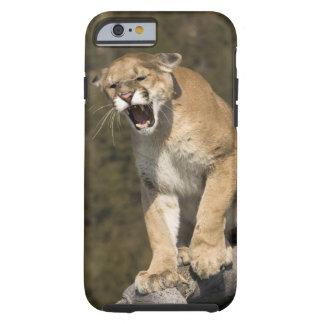 Puma or mountain lion, puma concolor, Captive - Tough iPhone 6 Case