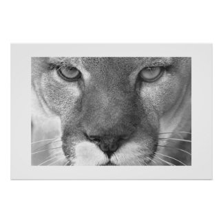 Puma Posters