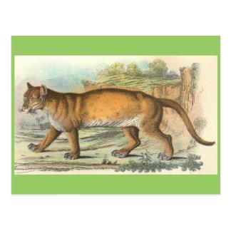 Puma Postcard