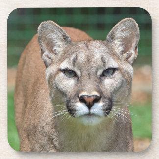 Puma, práctico de costa hermoso de la foto del leó posavasos