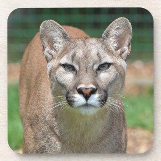 Puma, práctico de costa hermoso de la foto del leó posavasos de bebidas