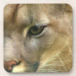 Puma salvaje posavasos
