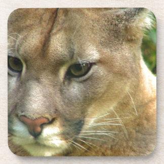 Puma salvaje posavasos de bebidas