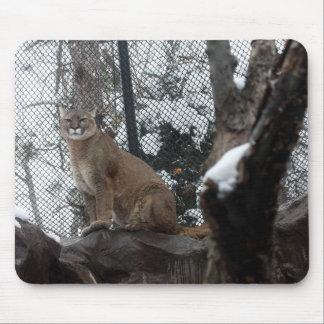 Puma Stare Down Mouse Pad