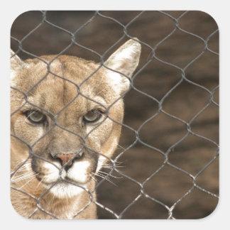 Puma...with Attitude! Square Sticker