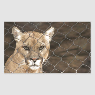 Puma...with Attitude! Rectangular Stickers