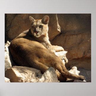 Puma y rocas impresiones